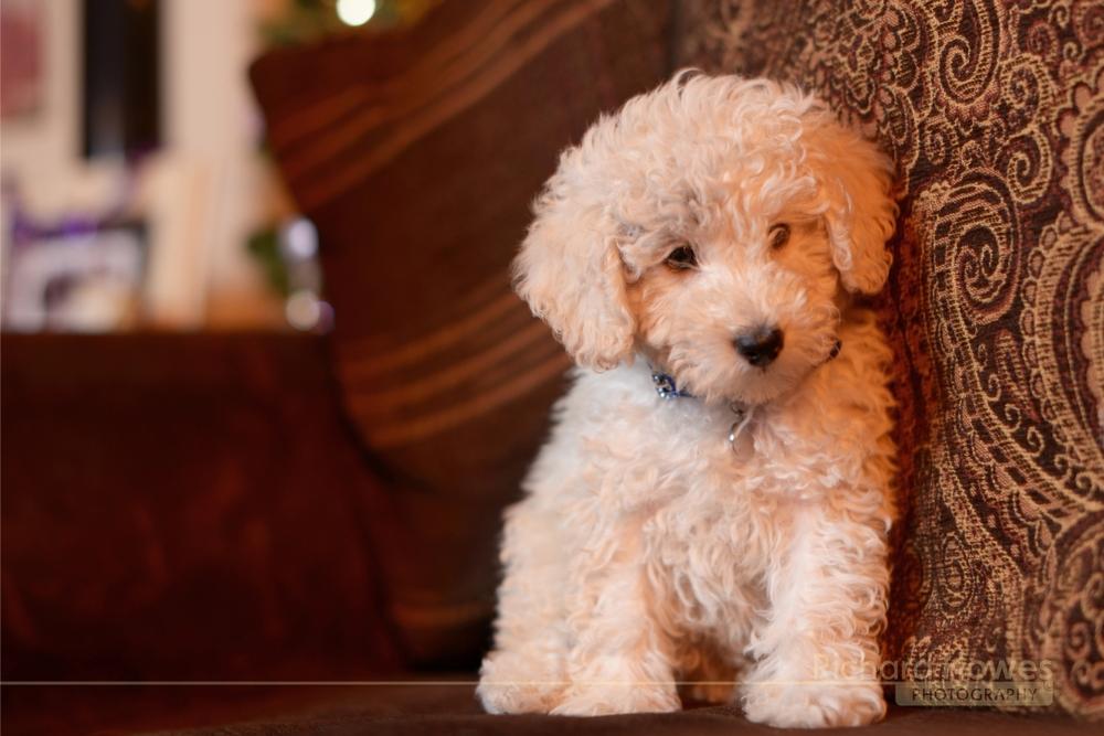 Pet dog 2.jpg