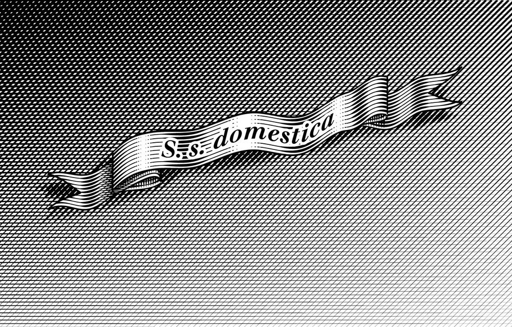 S.s. Domestics