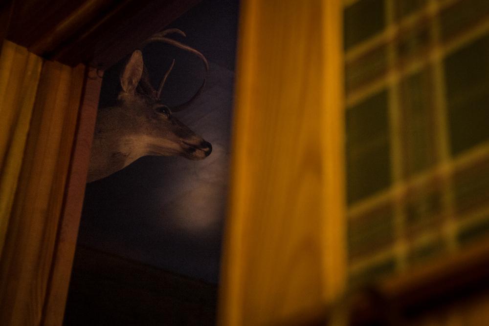 Deer. Elkins, West Virginia 2015