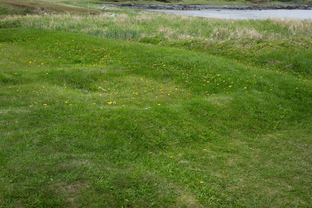 "A group of mounds near the village that the locals called the ""old Indian camp."", L'Anse aux Meadows, Newfoundland 2016"