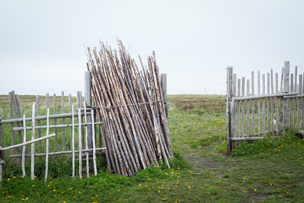 Timber, at the Viking reconstruction. L'Anse aux Meadows, Newfoundland 2016