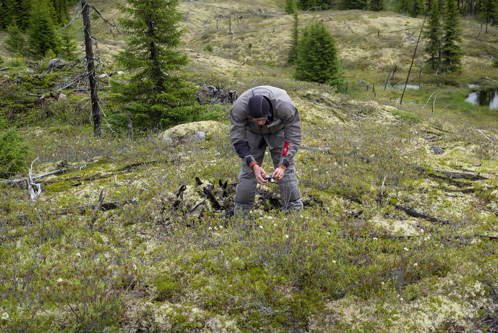 Cosmonaut-botanist in the field of dreams. Between Goose Bay and