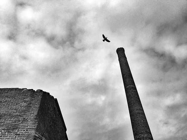 Old Cotton Mill with Bird