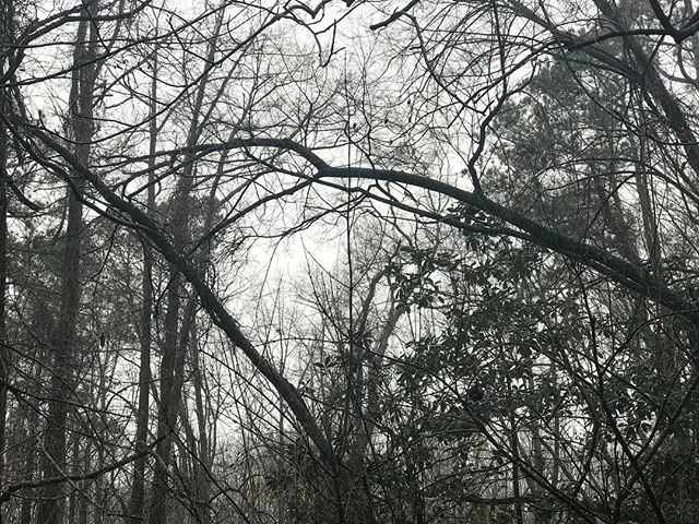 The naked trees bending in my backyard under the rain. It's pretty unruly in the best way.