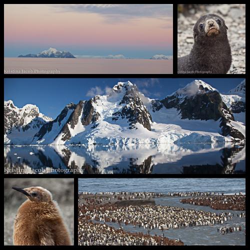 Antarctic_Collage