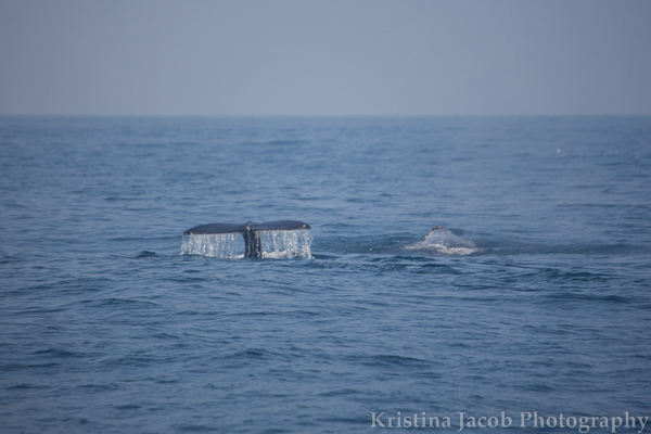 ChannelIslandsWhales-2383_low.jpg