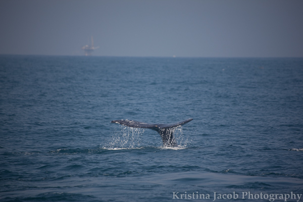 ChannelIslandsWhales-2492_low.jpg