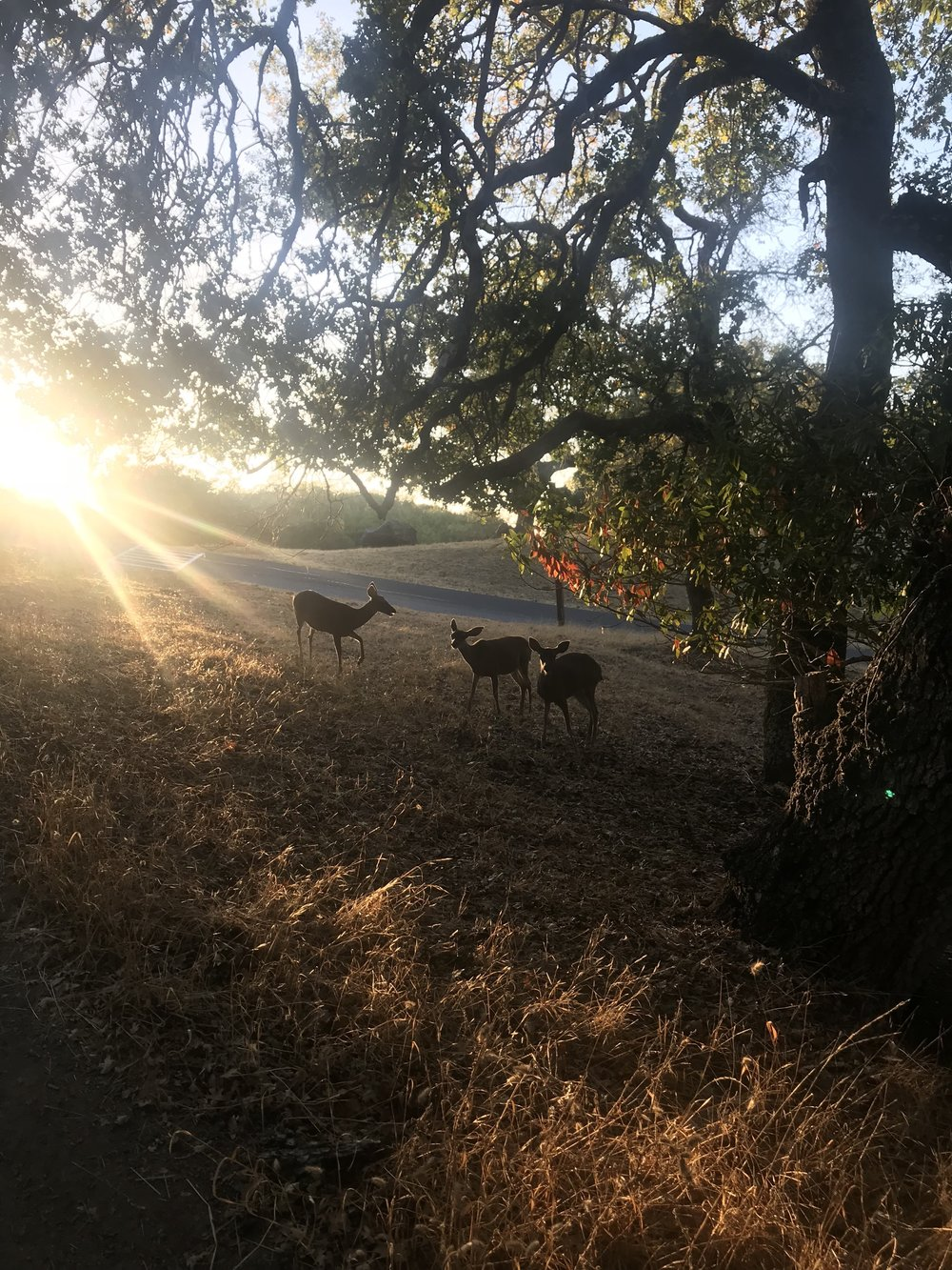 Biology retreat 2018. Deer at sunset. - 21 September 18