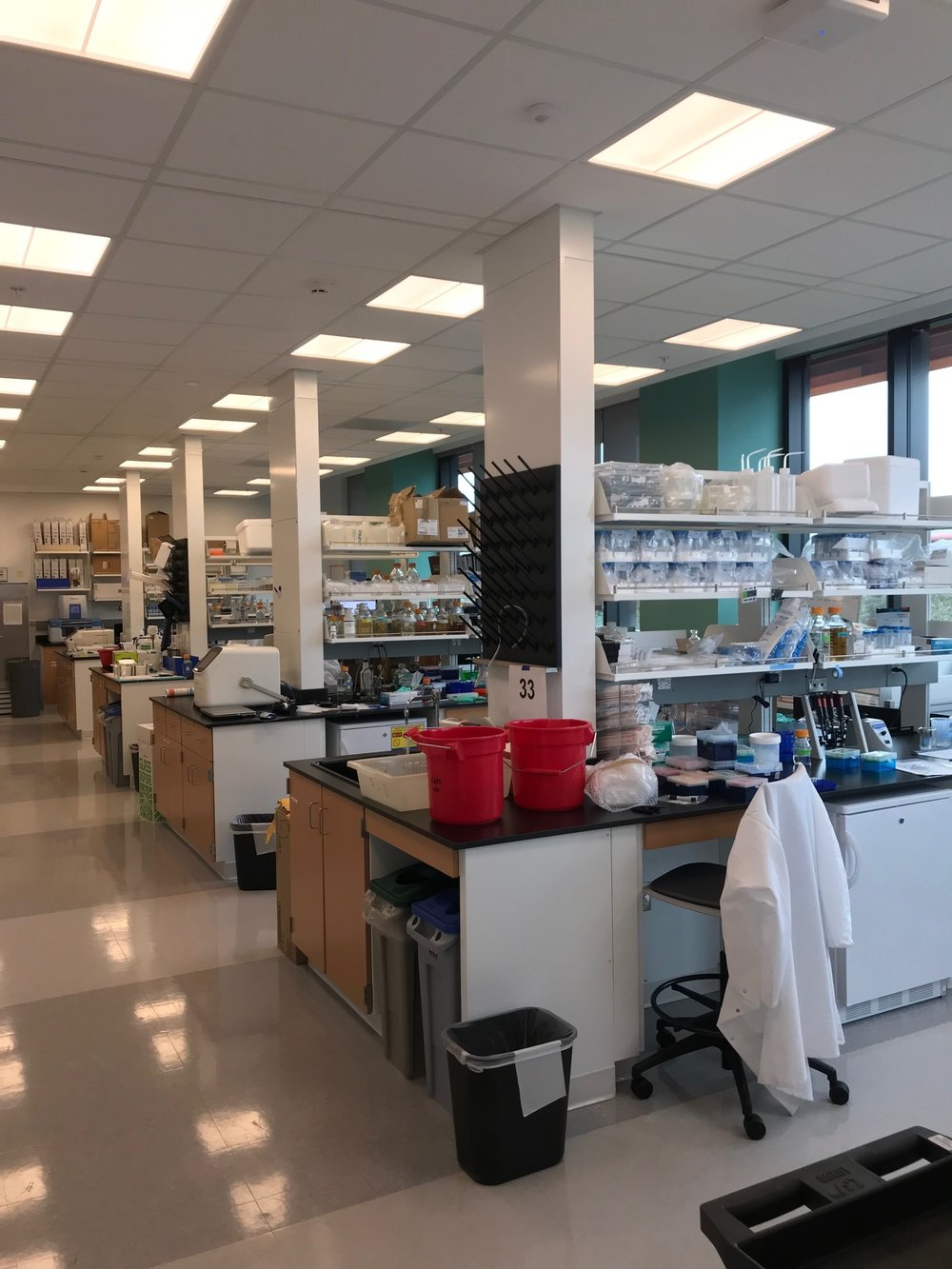 All moved in! The new lab in the Bass Biology Building is awesome. - 20 Nov 18