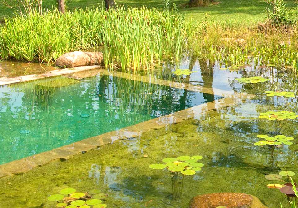 pond detail 001.jpg