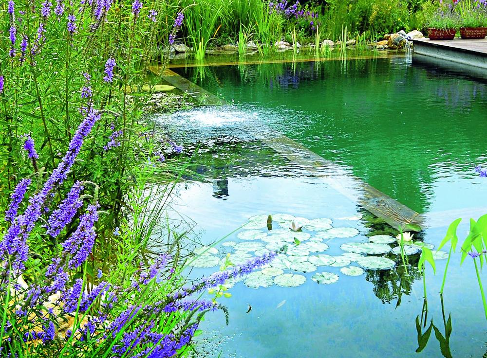 pond detail 002.jpg