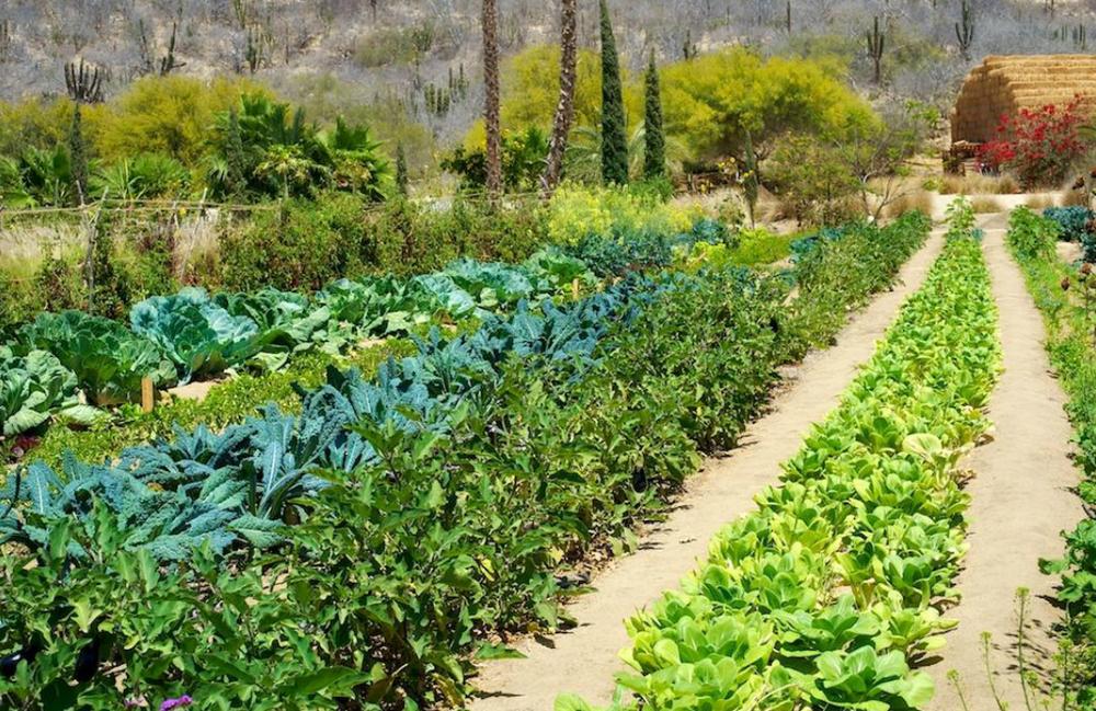 Flora Farm.png