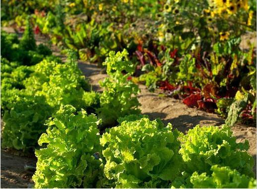 Flora-Farm-Photo.jpg
