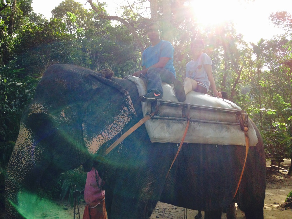 Weekend elephant rides!
