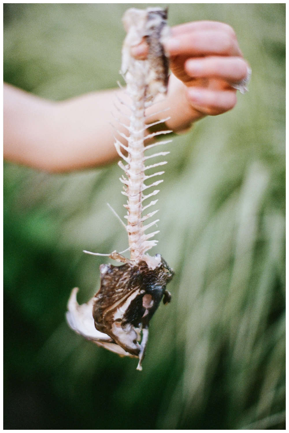 images by Lily Glass for Ginger and Birch shot on Kodak Portra 400