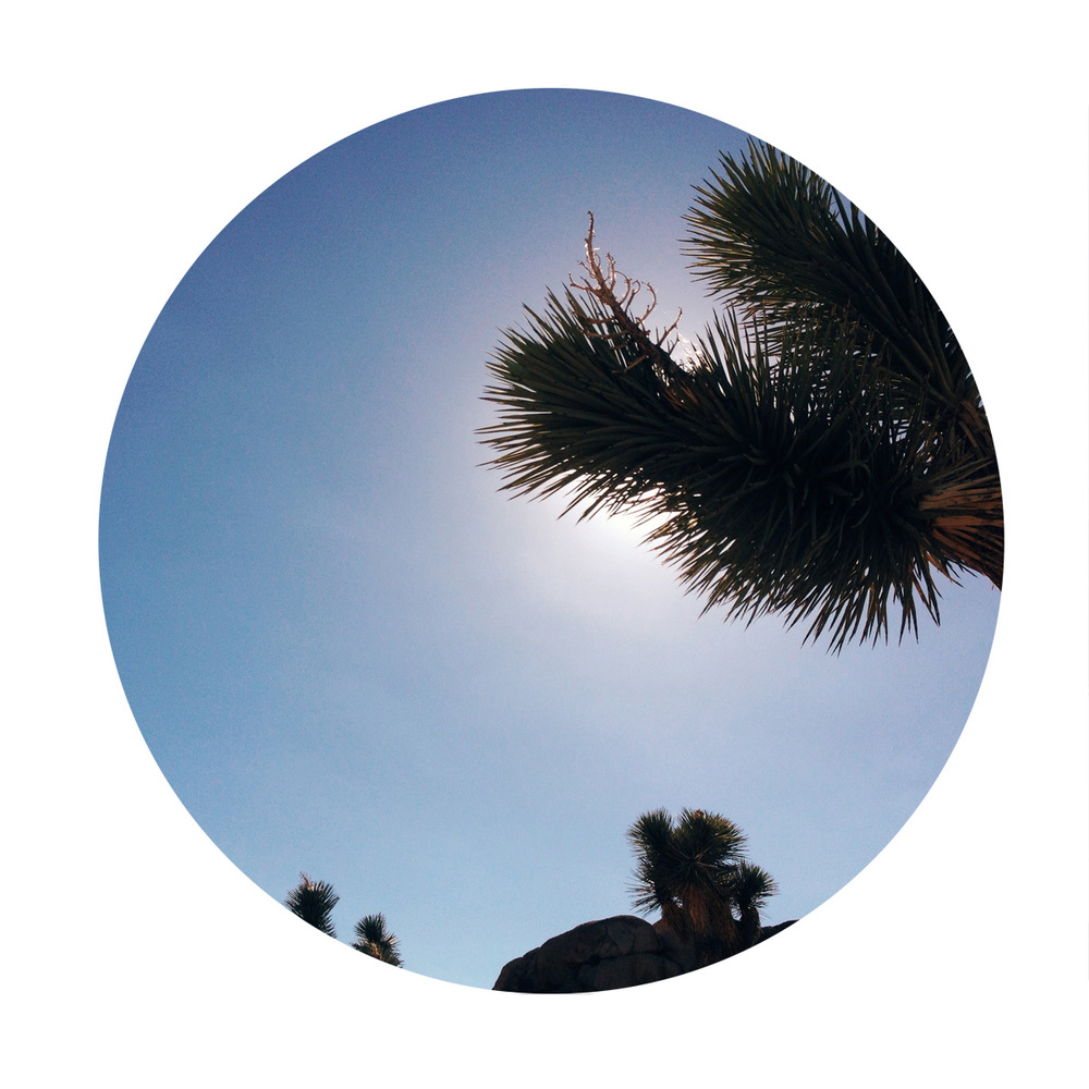 Joshua Tree | Free Download by Hart + Honey