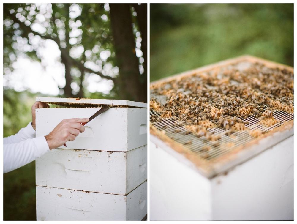 bees STUDY issue 01 | hart + honey