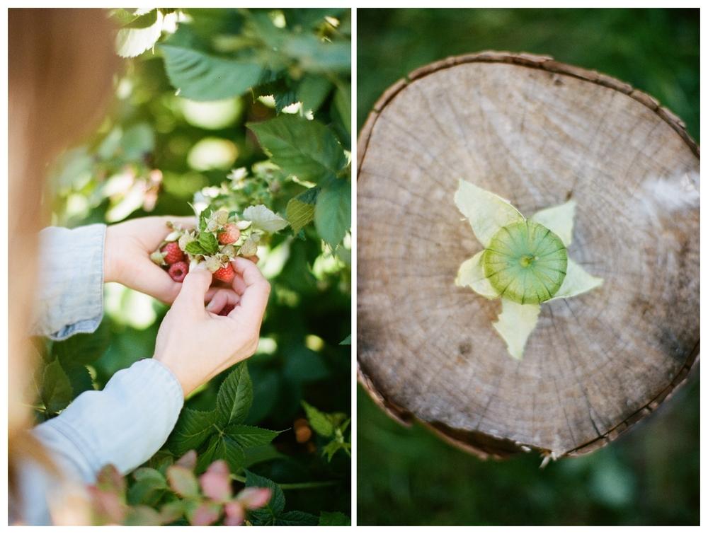 harvest | hart + honey