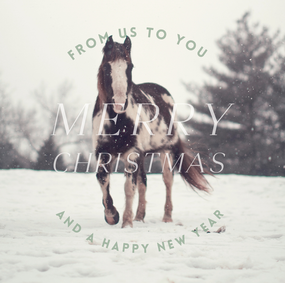 merry christmas from hart & honey / photograph by lily glass