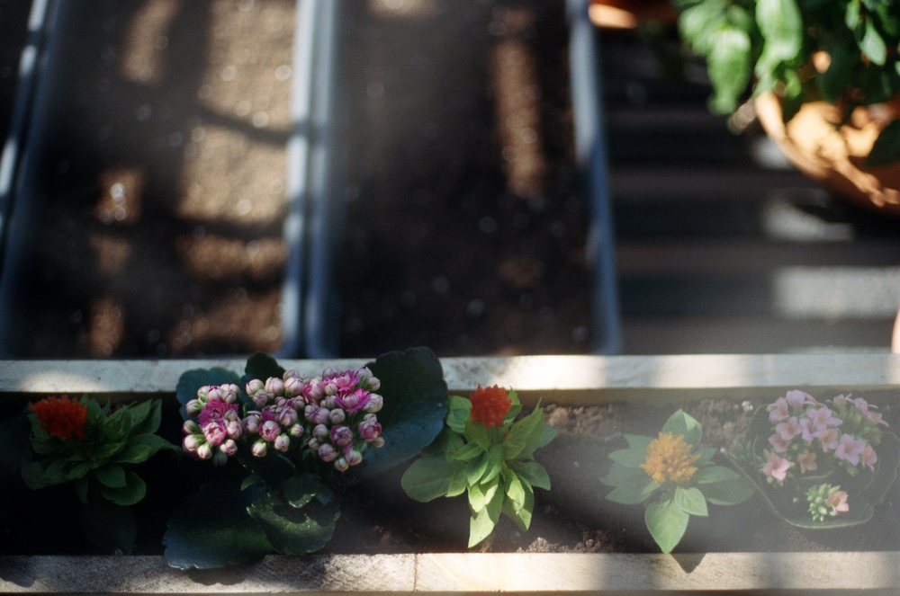 urban gardening in NYC | the dirt issue