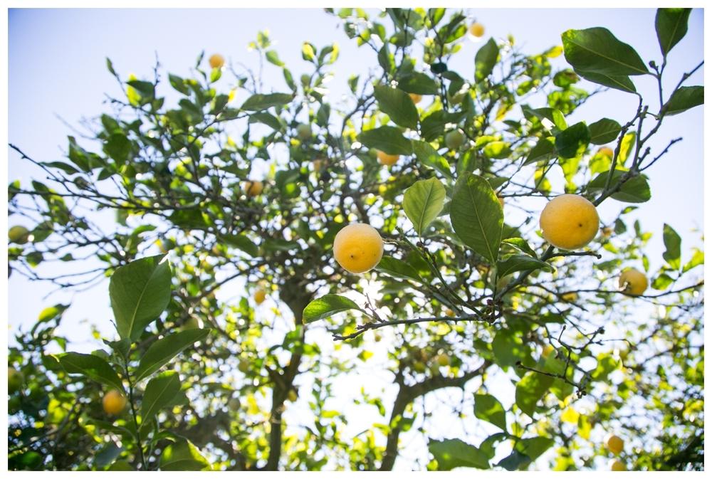 Hart+Honey Field Trip to Citrus Grove