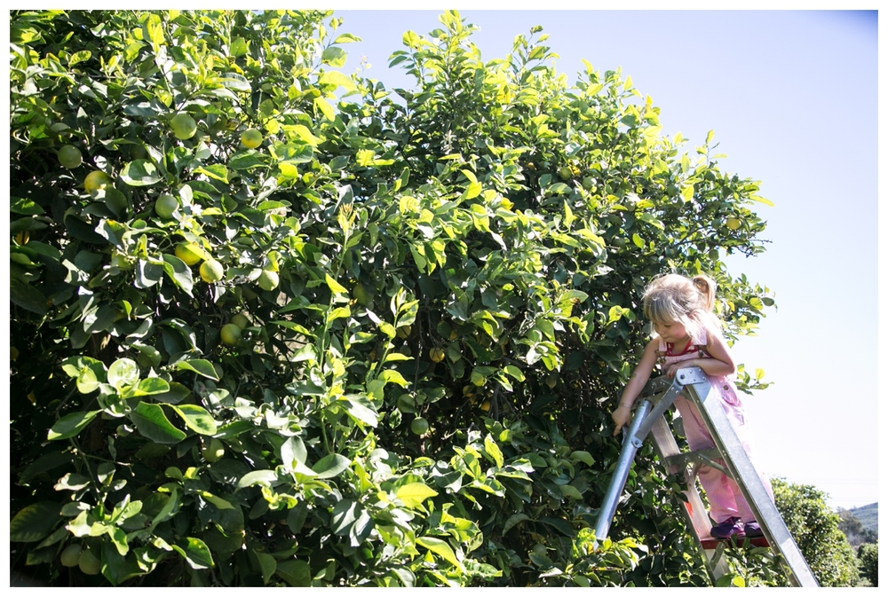 Hart+Honey Field Trip to Citrus Grove | The Citrus Issue