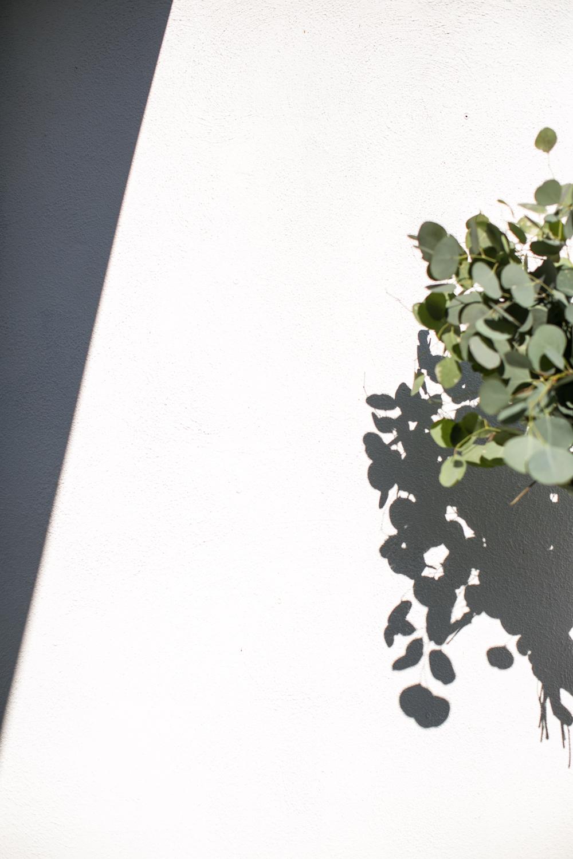 Hart+Honey_Eucalyptus01.jpg