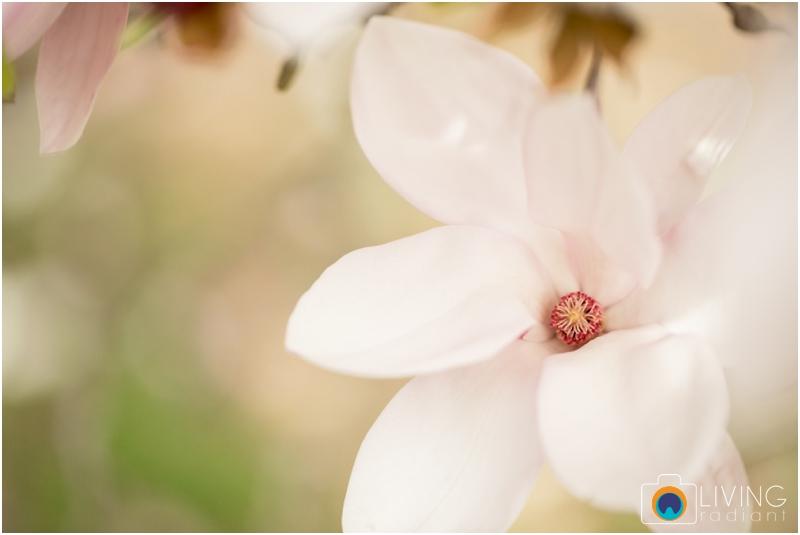 ashlee-chris-twin-maternity-clyburn-arboretum-living-radiant-photography-maggie-nolan-patrick-nolan_0028.jpg