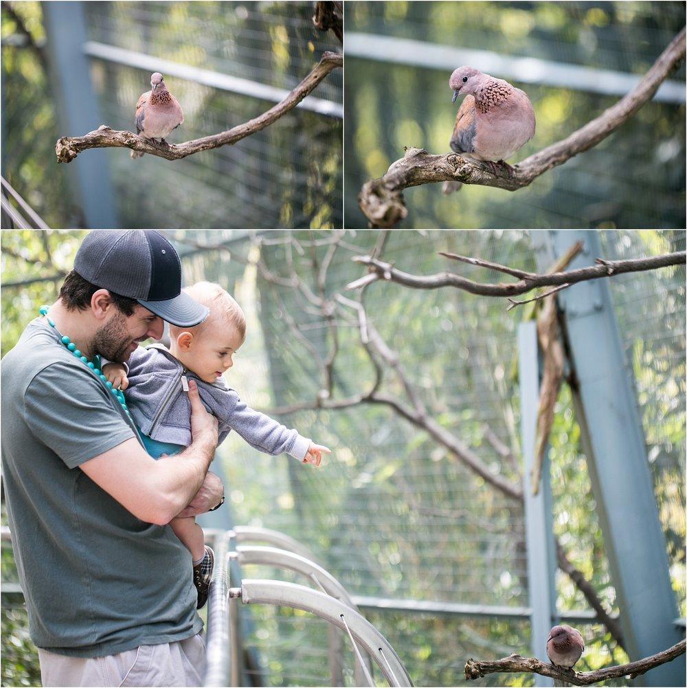 Zeke LOVES birds!