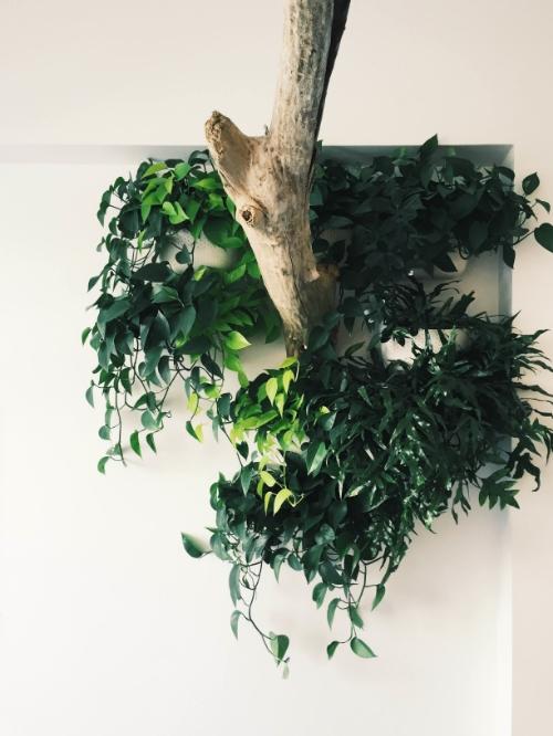 anna plantwall.jpg