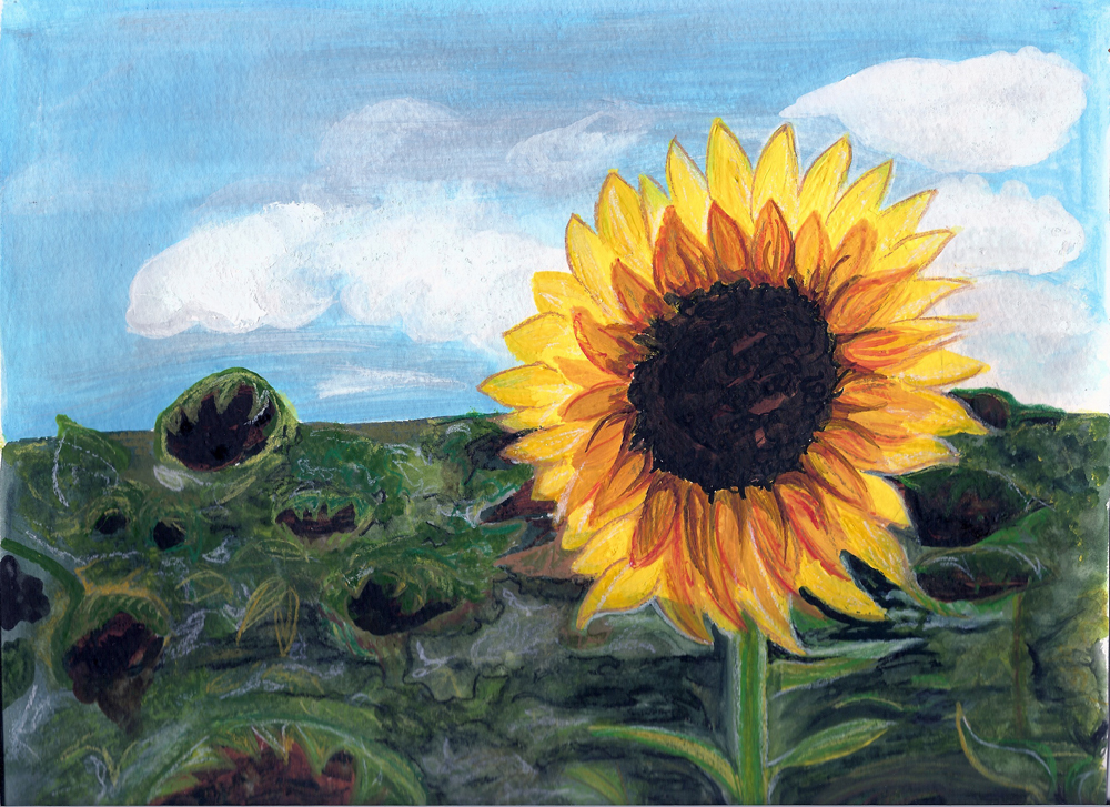 sunflower-sm.jpg