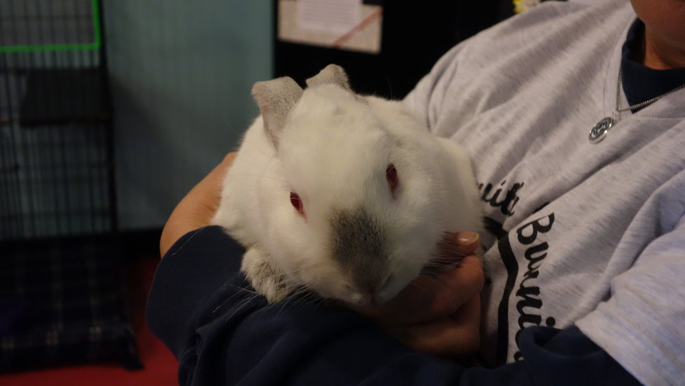 bun white held by Bonnie GOOD.JPG