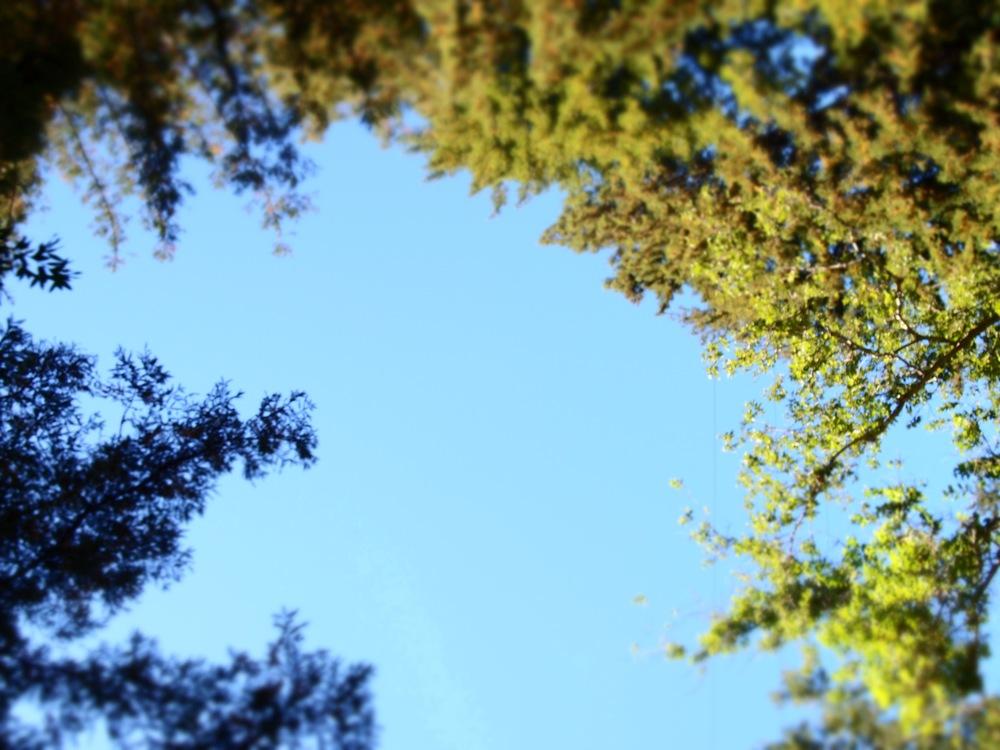 sky trees.jpeg