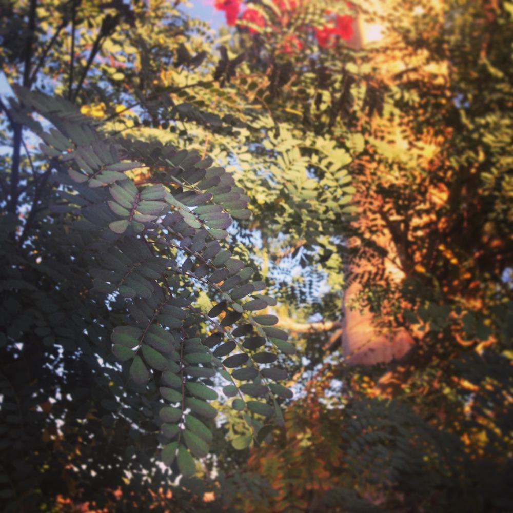 blurry trees.jpeg