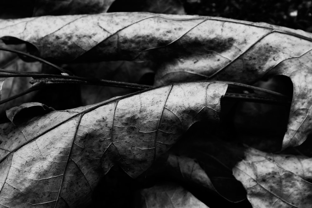 _MG_3303brownleaves1.jpg