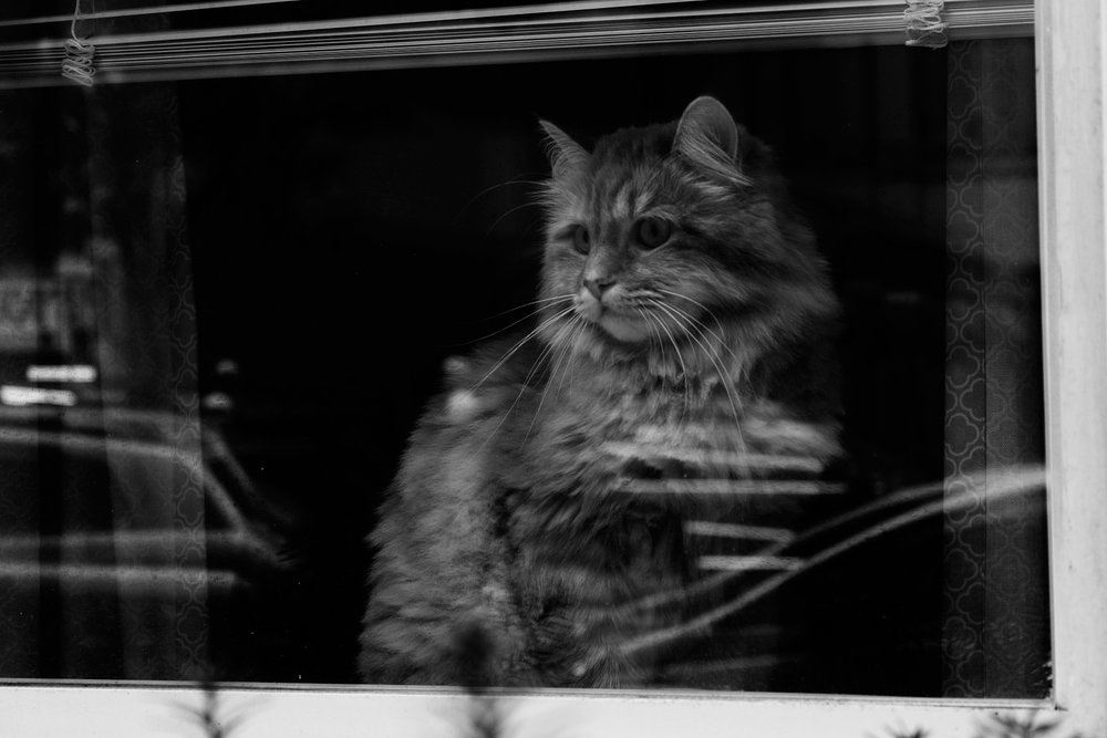 _MG_0683catversion5.jpg