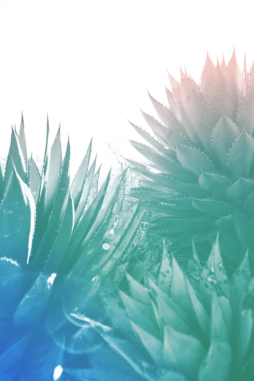 green-pink-blue-cactus2.jpg