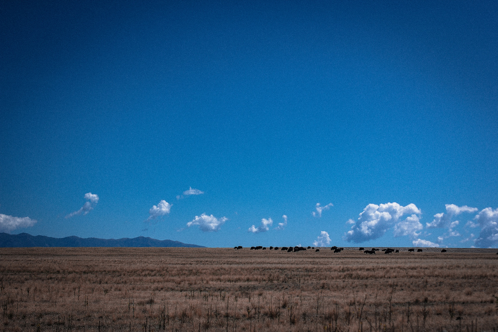 Antelope State Park, Utah, August 2014