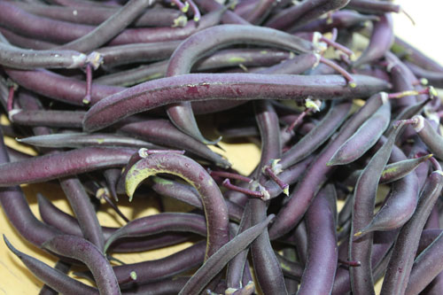 purple-beans-organic.jpg