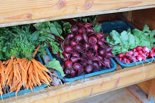 veggies_bins-500.jpg