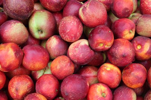 nectarines-organic.jpg