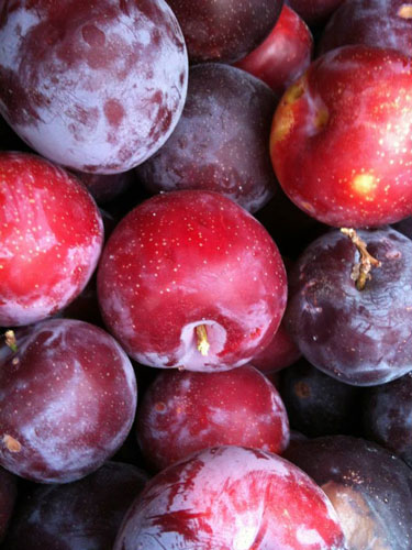 plums-organic-templeton-farms-500.jpg