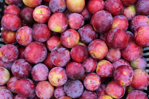 plums-organic.jpg