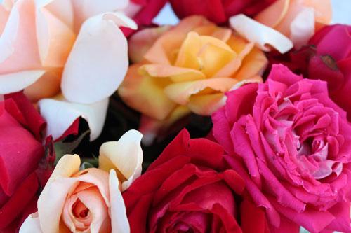 roses-500.jpg