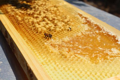 bees-honeycomb.jpg