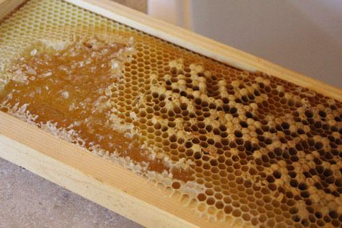 honeycomb-TVF.jpg