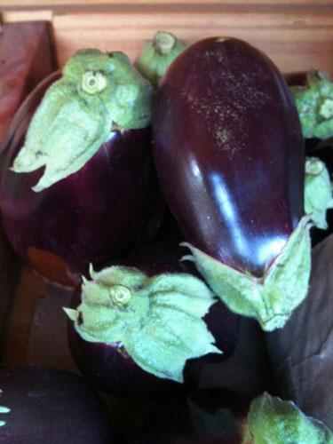 eggplant-organic-templeton-farms-500.jpg