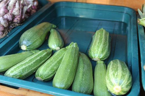 zucchini-500.jpg