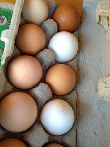 eggs2-500.jpg