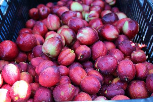 TVF-more1-nectarines-organic.jpg